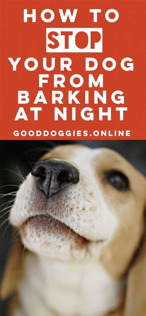 how to stop your puppy from barking best 25 dog barking at night ideas on pinterest miami