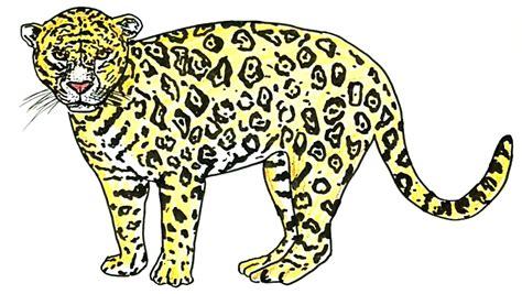 jaguar cycle diagram diagram of a jaguar animal wiring diagram