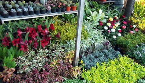 Bibit Bunga Jogja mencari toko tanaman hias harga murah konstruksi taman