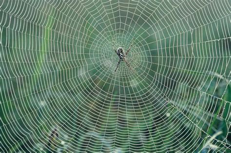 spiders web the spider web engineer