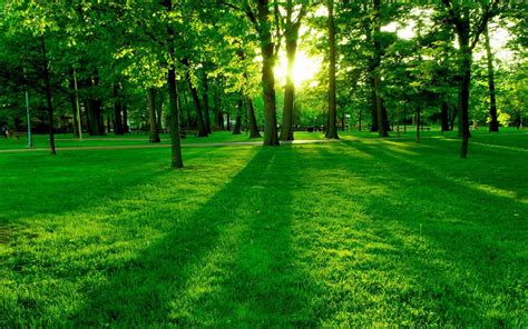 good green color the 10 nature green color hd wallpapers good for your