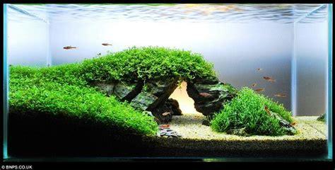 aquascape aquarium plants best 25 live aquarium plants ideas on pinterest live