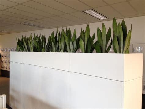 plant partition large indoor plant pots melbourne indoor planters melbourne