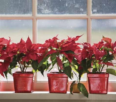 ideas for decorating window sills at christmas for church 20 beautiful window sill decorating ideas for and new years seasons