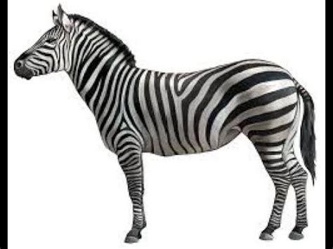 Zebra Free Search Zebra