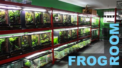 what is a frog room frog room tour jungle exotics
