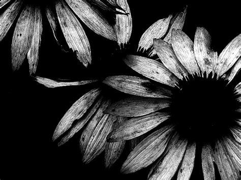 imagenes bacanas a blanco y negro fotos bonitas en blanco y negro