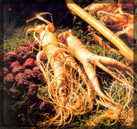 Ginseng Cina popular ginseng buy cheap ginseng lots from china ginseng suppliers on