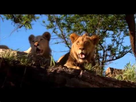 film with a black lion white lion movie part 5 youtube