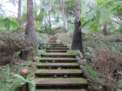 lotus garten hagen free photo mystical stairs tropical garden free image