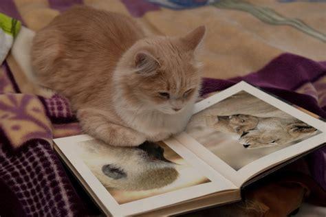 imagenes de animales leyendo libros libros para los amantes de los gatos vive cruelty free