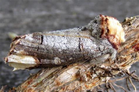 insetto stecco alimentazione 7 animali maestri mimetismo