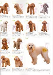 different styles of hair cuts for poodles poodle grooming styles