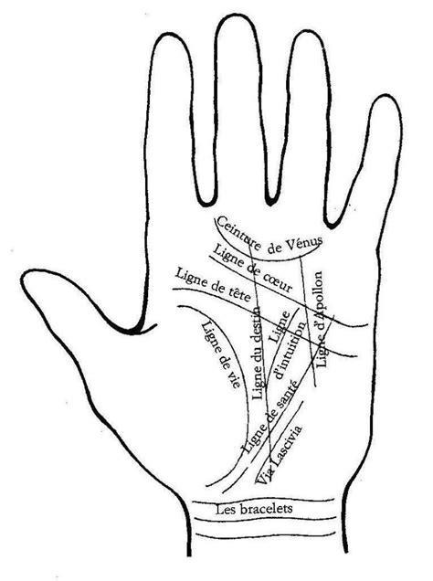 combien de lignes avez vous dans une main, y a t il une