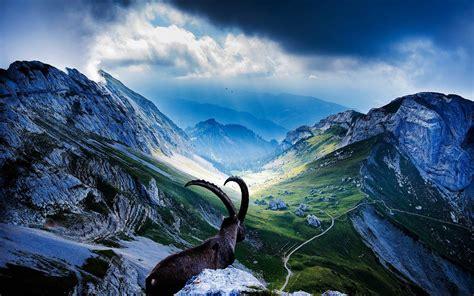 rocky peaks goat green meadows  grass dark clouds