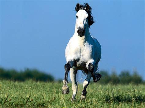 gratis paarden gratis paarden newhairstylesformen2014 com