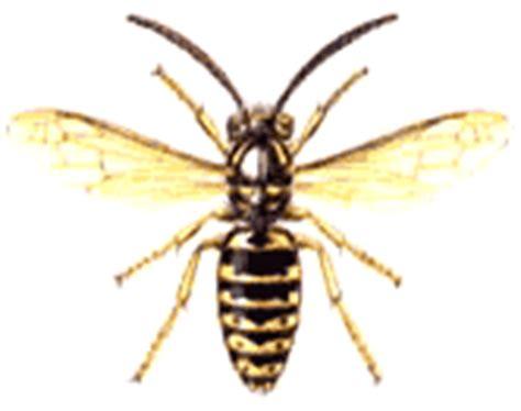 veleno mortale fatto in casa insetti e pericolosita