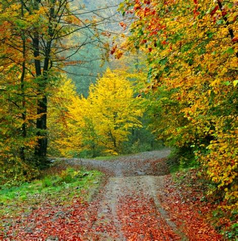 quotes about fall colors quotesgram fall foliage friend quotes quotesgram