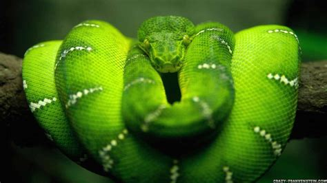 wallpaper green snake green neon wallpapers wallpaper cave