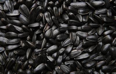 black sunflower seeds for horses weight gain bird feed mcgough s inc