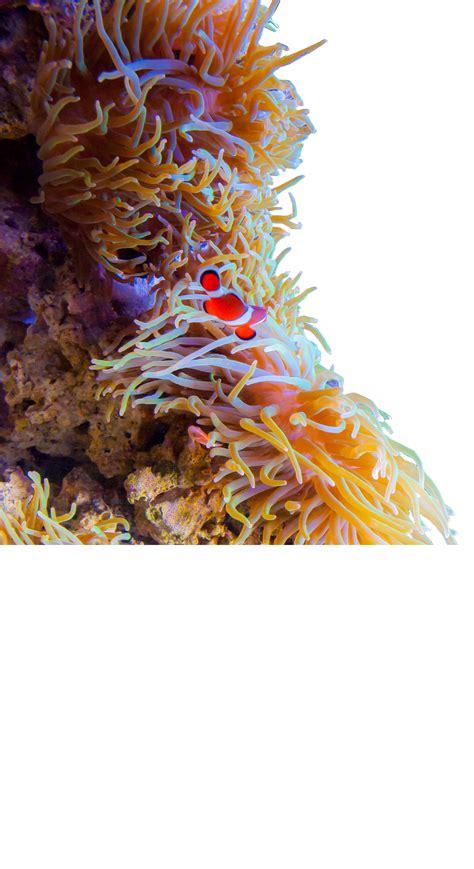 logos  living planet aquarium