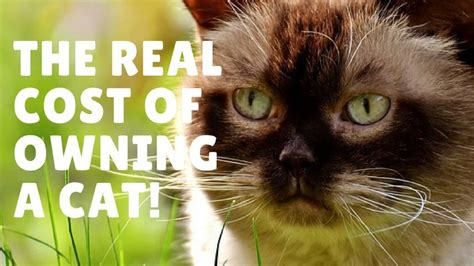 how much to charge for sitting overnight how much does owning a cat cost a breakdown of costs