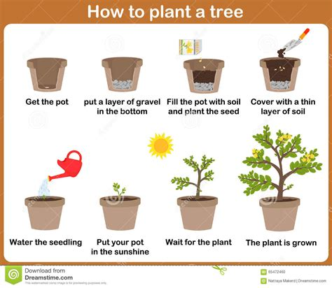 top 28 plants how to grow how to grow a kiwi plant