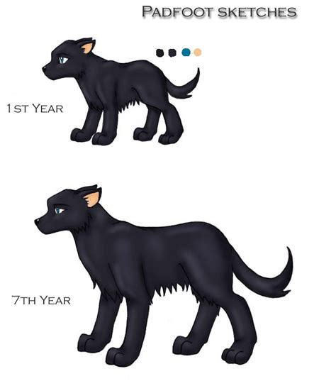 sirius puppy sirius black dogs by blue on deviantart