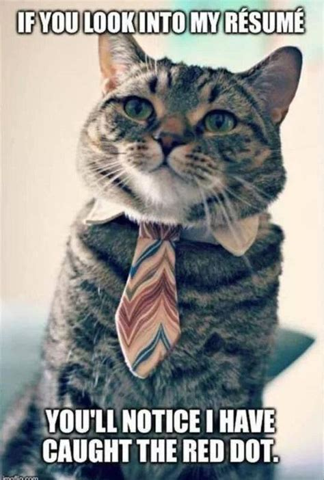 Cat Funny Meme - business cat resume funny pics memes captioned