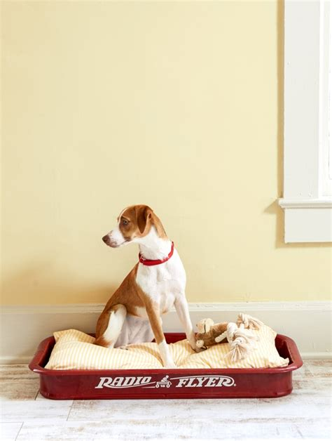 little red dog house 21 creative dog beds ideas to get inspired