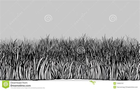 Sketches Grassy Land by Grass Field Stock Vector Image Of Bush Green Botany
