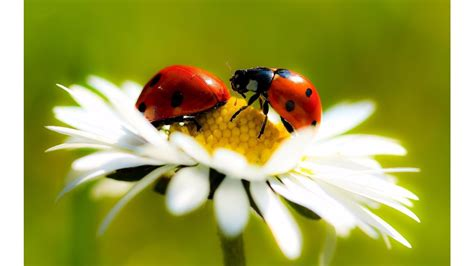 lady bug wallpaper images