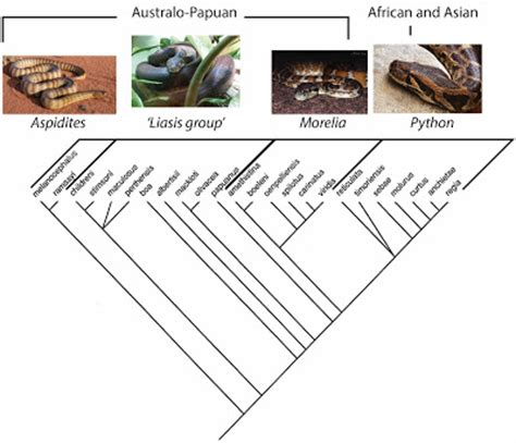pattern classification python species account evolution and natural selections ball