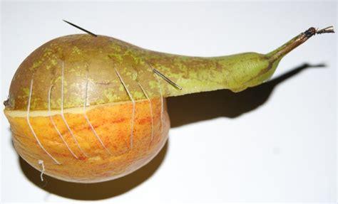 apple pear hybrid by radi0active lem0ns on deviantart