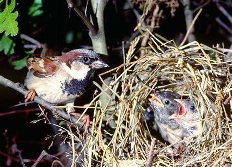 avitrol environmentally sound bird control