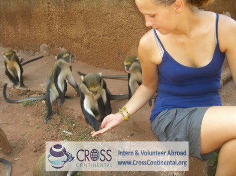 intern abroad free wildlife internships abroad intern or volunteer abroad