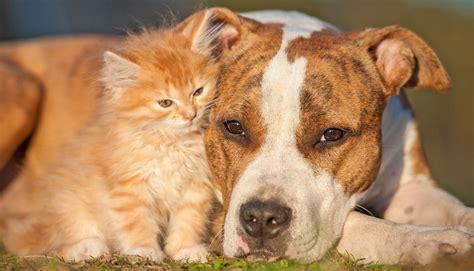cani alimentazione alimentazione estiva per cani e gatti cosa cambia