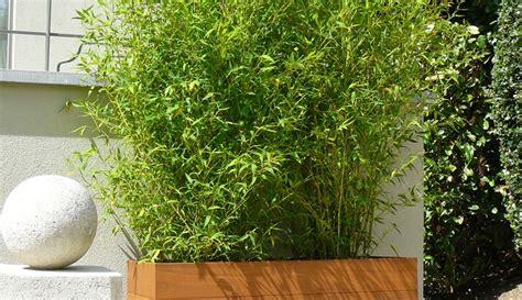 Bac Bambou Terrasse by Quel Bac Pour Bambou Pivoine Etc