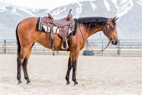 for sale horses horse sale equine usu