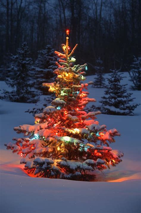 christmas tree with lights outdoors in photograph by