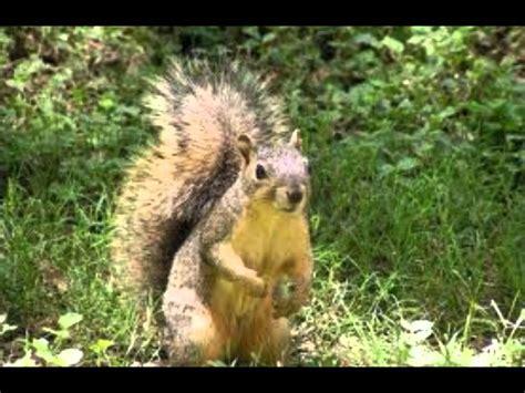 imagenes animales que viven en el bosque animales del bosque wmv youtube