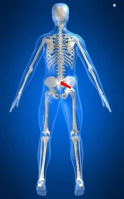 dolore osso sacro da seduta sciatica e muscolo piriforme agopuntura torino