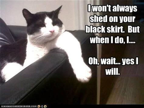 Do Black Cats Shed by Cat Fur Cat Grooming Solutions