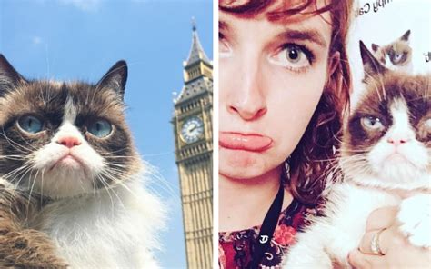 grumpy cat hysteria hits  uk  crowds queue  hours  meet  celebrity animal