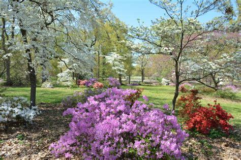 photos azalea garden at bryan park entertainment