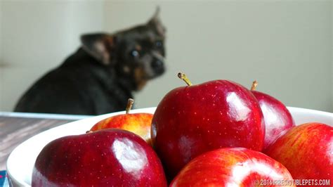 apples and dogs diy frozen apple treat recipe irresistible pets