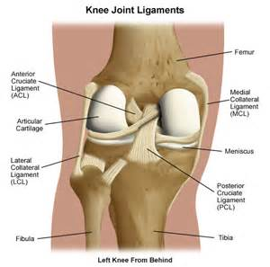 Interior Knee Ligament Learn About Posterior Cruciate Ligament Pcl Injuries