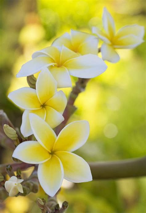best flowers in the world flowers from hawaii 522 best hawaiian tropical flowers images on pinterest