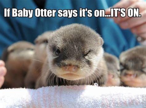 Funny Otter Meme - baby otter macros memes pinterest