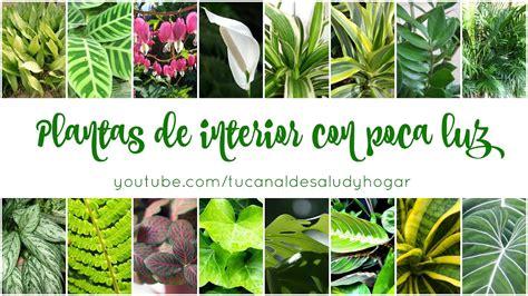 plantas de interior sin luz plantas de interior con poca luz youtube
